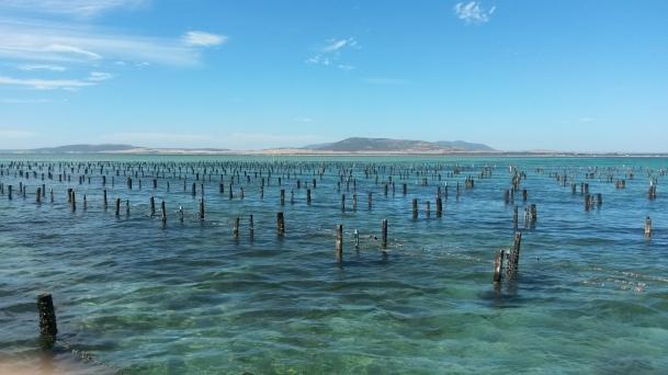 Oyster farm in Coffin Bay